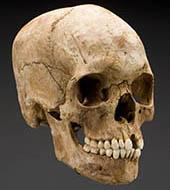 We couldn't get a photo of Powell's actual skull so just imagine this one with reeeeeally bad teeth. Source: Smithsonian's Written in Bone exhibit)